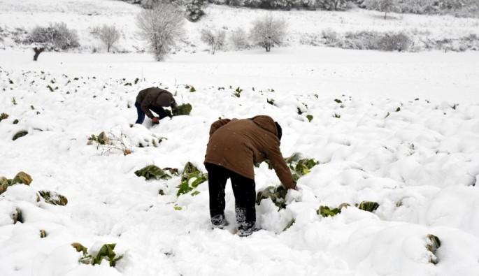 Bursa'da çiftçiyi kar vurdu