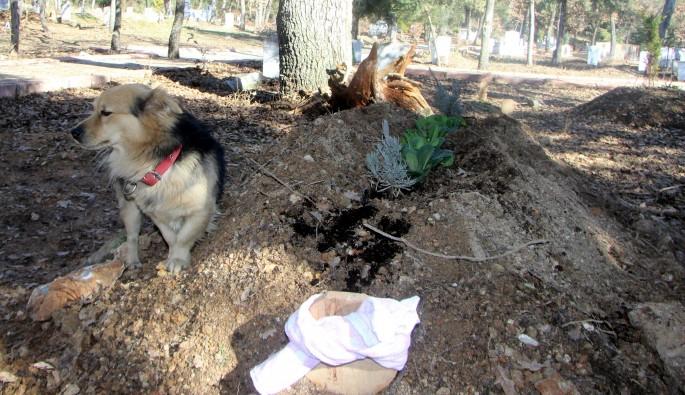 Bursa'da vefakar köpek her gün ölen sahibinin mezarına gidiyor