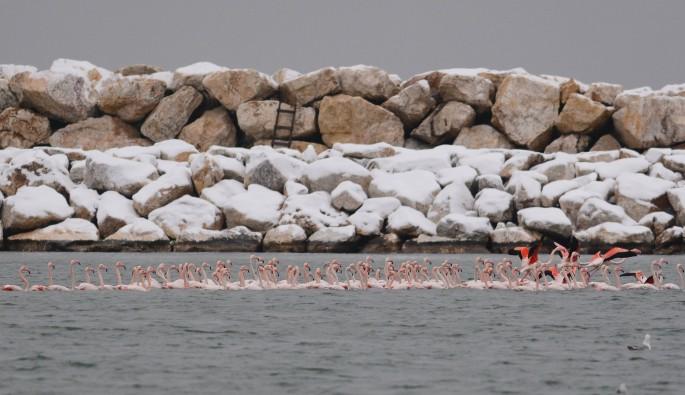 Bursa'da soğuktan etkilenen flamingolar barınağa sığındı