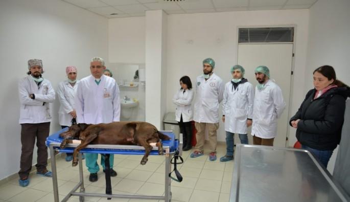 Bursa'da köpeğe burun ameliyatı
