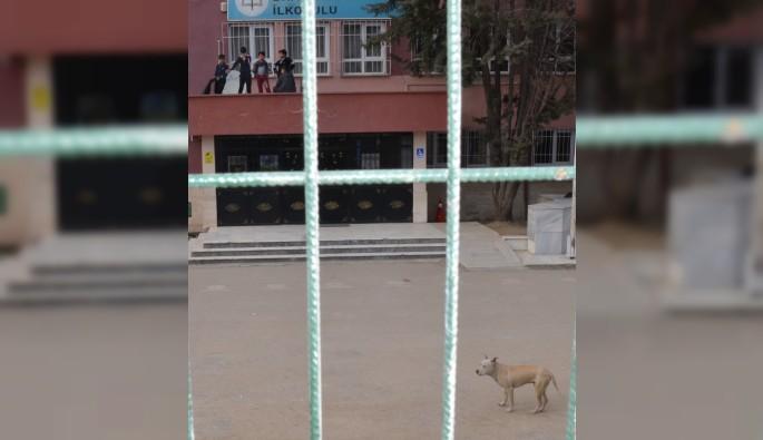 Bursa'da okul bahçesinde Pitbull dehşeti