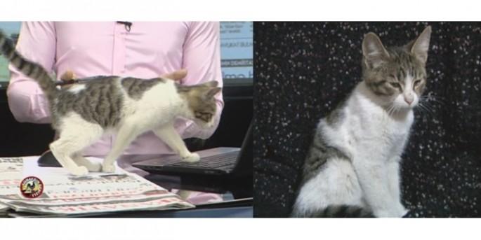 Site bahçesinde 30 sokak kedisi zehirlenmiş halde bulundu
