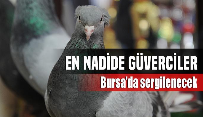 En nadide güvercinler Bursa'da