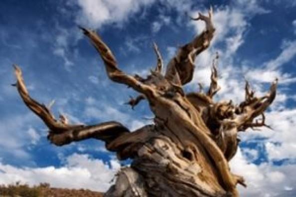 Yeryüzünün en yaşlı canlısı