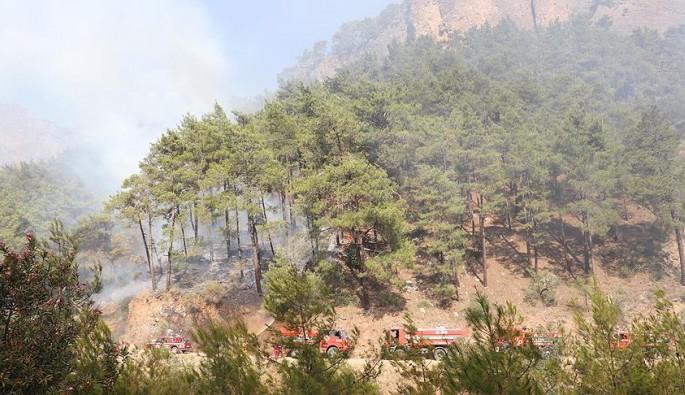 Antalya'da alev alan otobüsün yangını ormana sıçradı