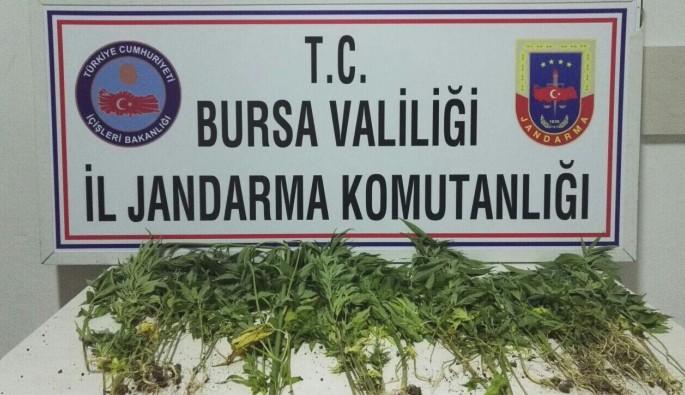 Bursa'da jandarmadan uyuşturucu operasyonu