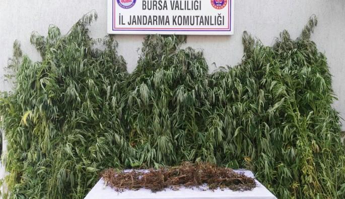 Bursa'da sazlıklarda uyuşturucu ele geçirildi