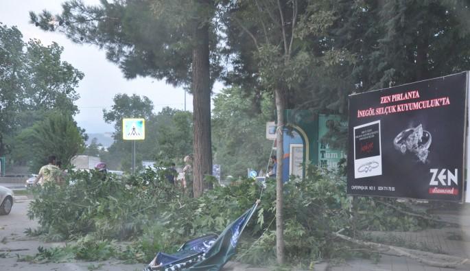 Bursa'da şiddetli rüzgar ağaçları devirdi