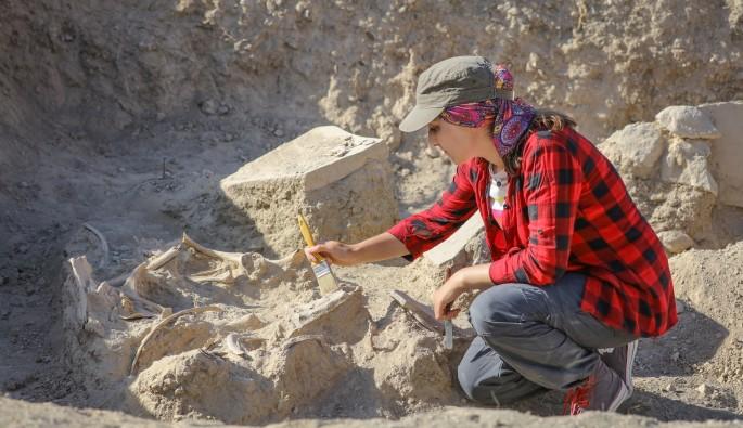 Çavuştepe'de devam eden kazılarda 2 bin 800 yıllık at iskeleti bulundu