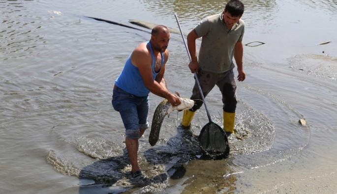 Edirne'de süs göletinde çıkan balıklar herkesi şaşırttı