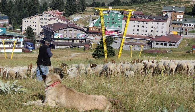 Uludağ'da kayak pistleri koyunlara kaldı