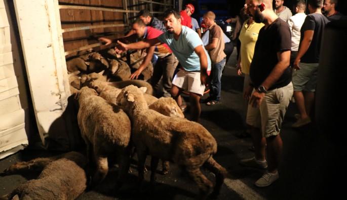 Hayvan yüklü kamyonda can pazarı