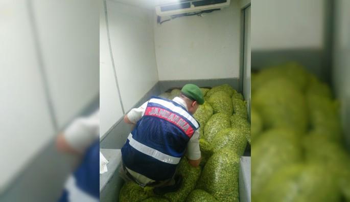 Bursa'da midye kaçakçılığına operasyon