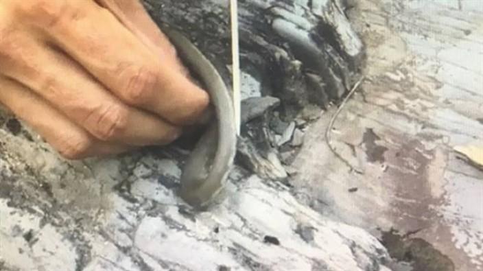 Yılanı pişirip yedi! Sosyal medyada paylaşınca yakalandı