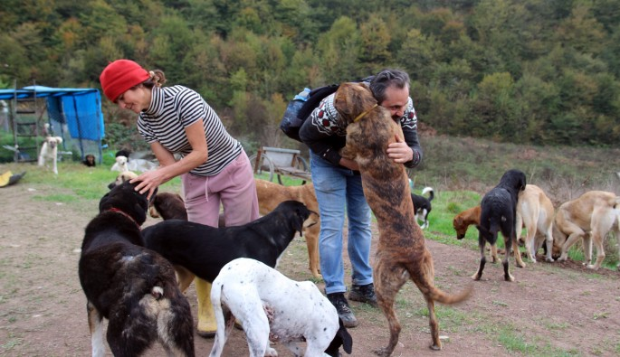 Terk edilmiş 120 köpeğe yuva oldular