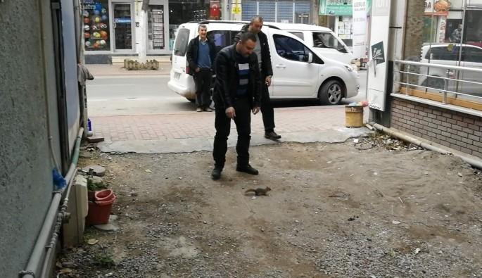Firari sincap Bursa'da vatandaşı terletti