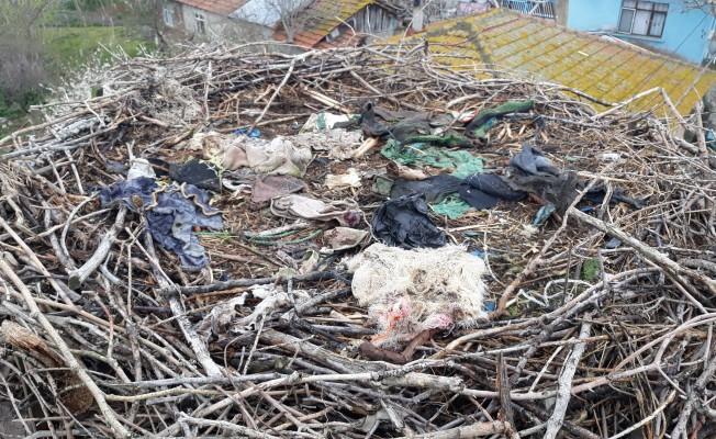 Bursa'da leylek yuvalarında bahar temizliği