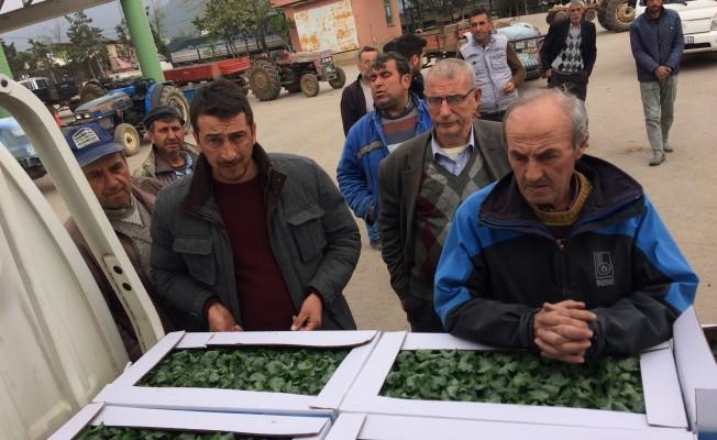 Bursalı çiftçilere 150 bin kabak fidesi dağıtıldı