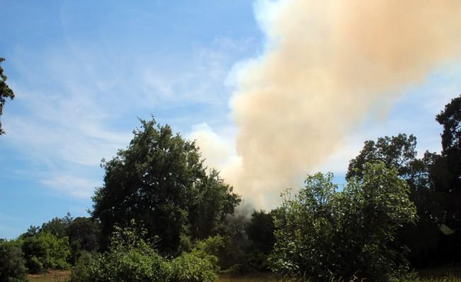 Orman alev alev yandı!