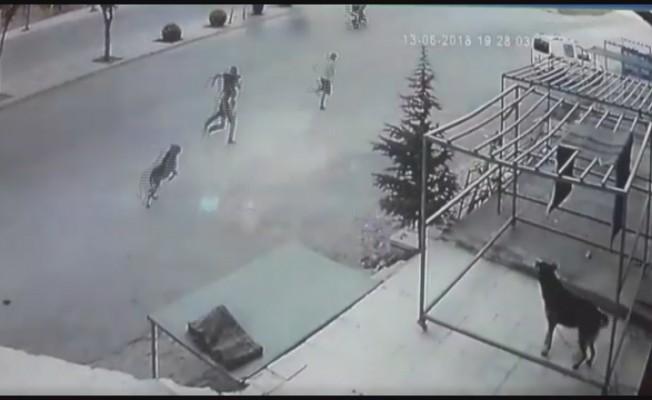Köpekten kaçarken otomobil çarptı