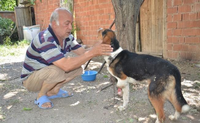 Yaban hayvanlarının yaraladığı av köpeğine şefkat eli uzandı