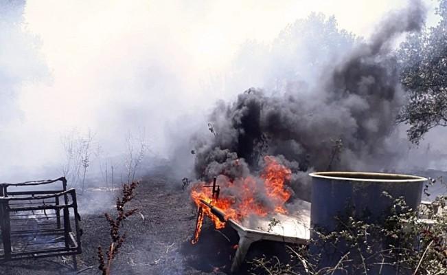 Arazi yangınında zeytin ağaçları da yandı