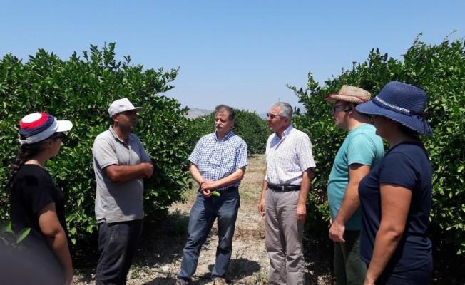 Aydın'da, Akdeniz Meyve Sineği'ne karşı önlemler arttırıldı