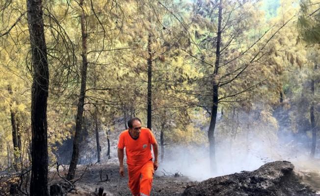 Hatay'da orman yangını
