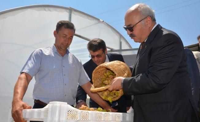 Kaliteli incir için devlet destekleri sürüyor