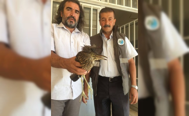 Yaralı Balan kuşu tedavi altına alındı