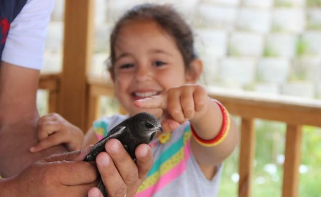 Yerde nadir görülen kuşlardan biri olan Ebabil kuşu Erzurum'da bulundu