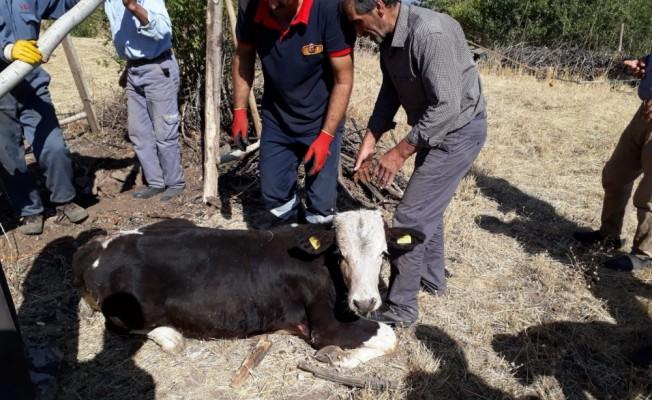 Bingöl'de kuyuya düşen inek kurtarıldı