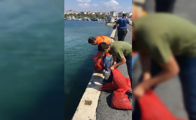 Silivri'de yaklaşık 3 ton midye ele geçirildi