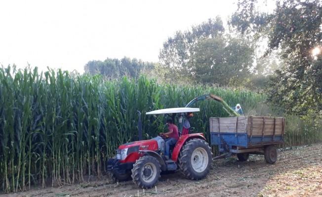 Simav Ovası'nda silajlık mısır bereketi