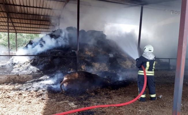 Besihanede çıkan yangında bir büyükbaş hayvan telef oldu