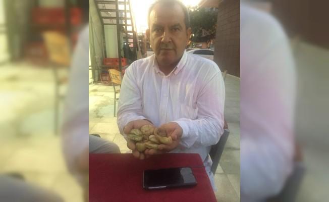 İncir doktoru Ahmet Er'den sezon değerlendirmesi