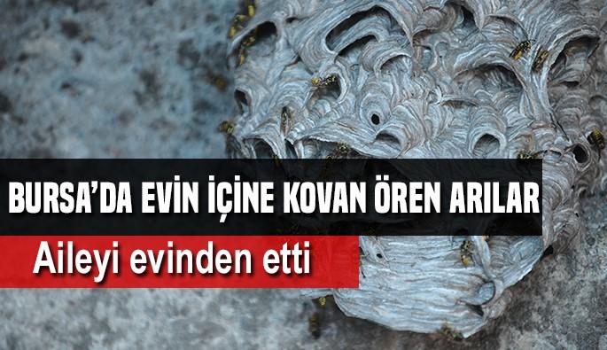 Bursa'da 7 kişilik ailenin evini arılar istila etti