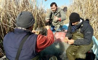 Kerevit Bursalı balıkçıların yüzünü güldürdü