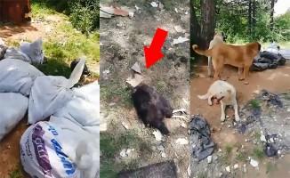 Bursa'da skandal manzara! Yüzlerce ölü tavuk...