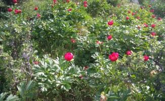 Çiçek koparana 48 bin lira ceza kesilecek