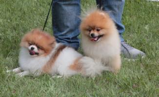 Köpekler kıyasıya yarıştı