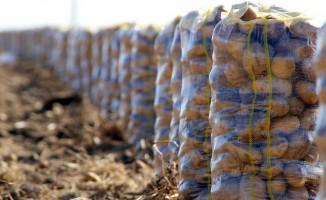 'Patates fiyatını hastalık artırdı'