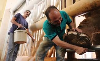 5 tonluk fillerin bayram temizliği