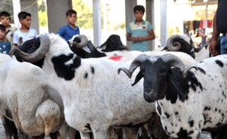 Akçakale'deki kurbanlık hayvan pazarında hareketlilik