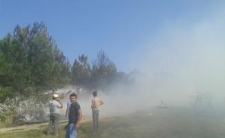 Atatürk Hatıra Ormanı'nda yangın: 400 çam kül oldu