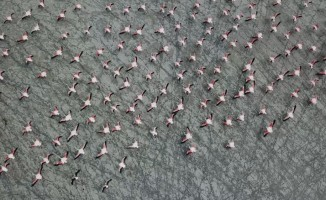 Burdur'un Yarışlı Gölü, 141 tür kuş türüne ev sahipli yapıyor