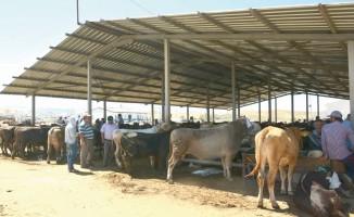 Hayvan pazarında bayram hareketliliği