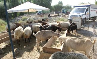 Malazgirt'te kurban pazarı açıldı