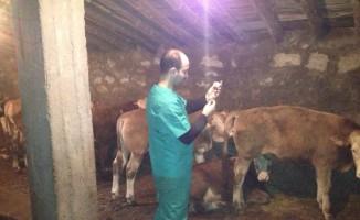 Ağrı'da sonbahar aşısı başladı