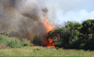 Antalya'daki orman yangını ucuz atlatıldı